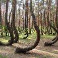 crooked forest presso Gryfino nella Polonia occidentale, o se preferite la foresta degli alberi ricurvi