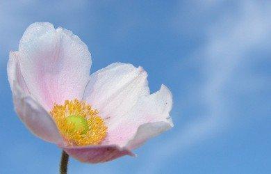 fiore-trapianto-reni-rifiutato