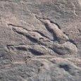 Bambina di 4 anni scopre impronta di dinosauro!